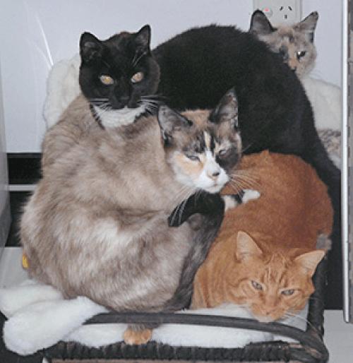 Stephanie Stephens Health Pets Cat